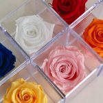 Buy Preserved Roses